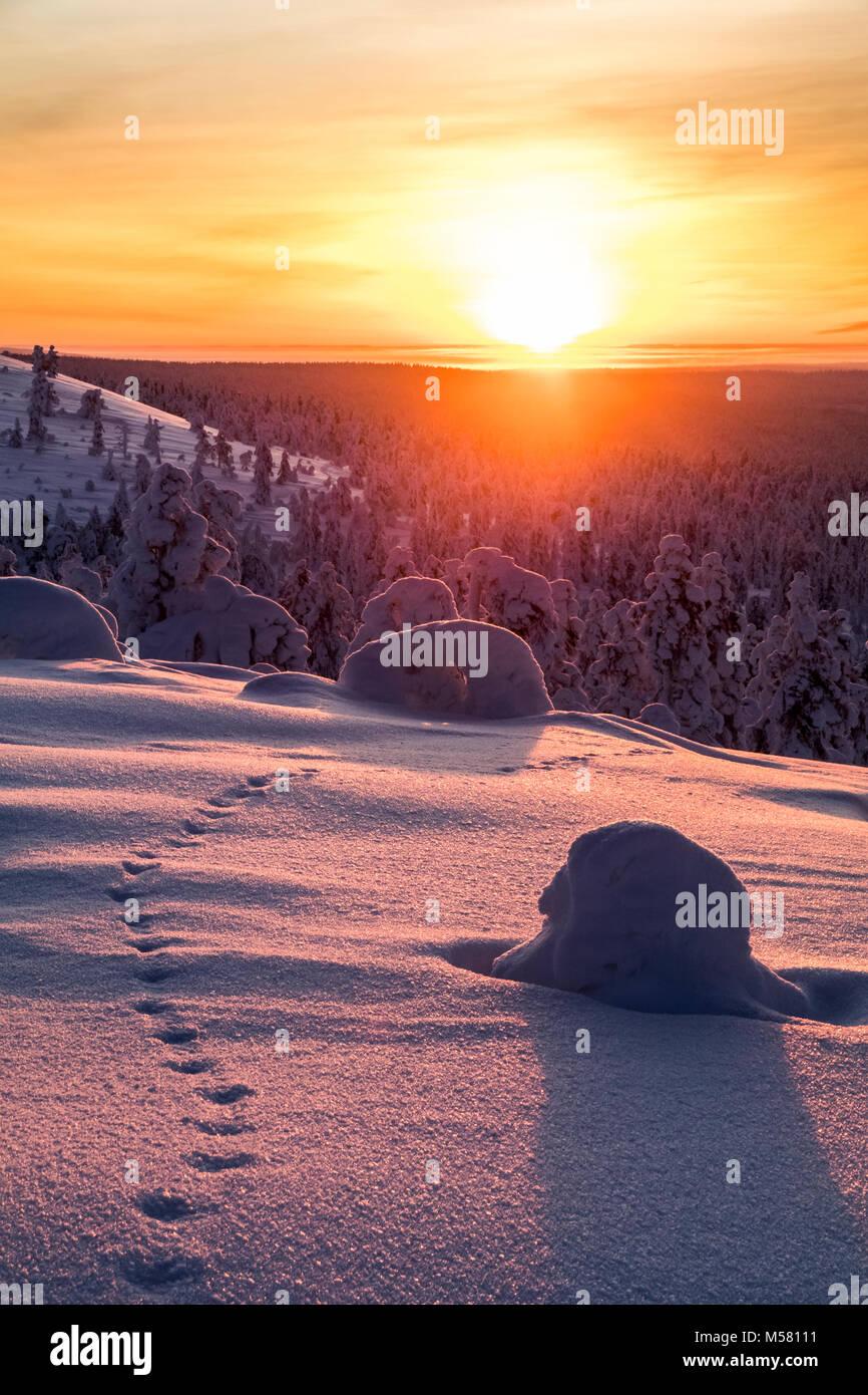 Fox Titel im Sonnenuntergang Stockfoto