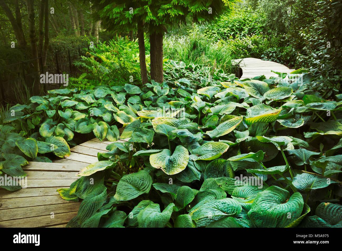 Exotische Pflanzen Mit Großen Grünen Blättern Um Geschwungenen