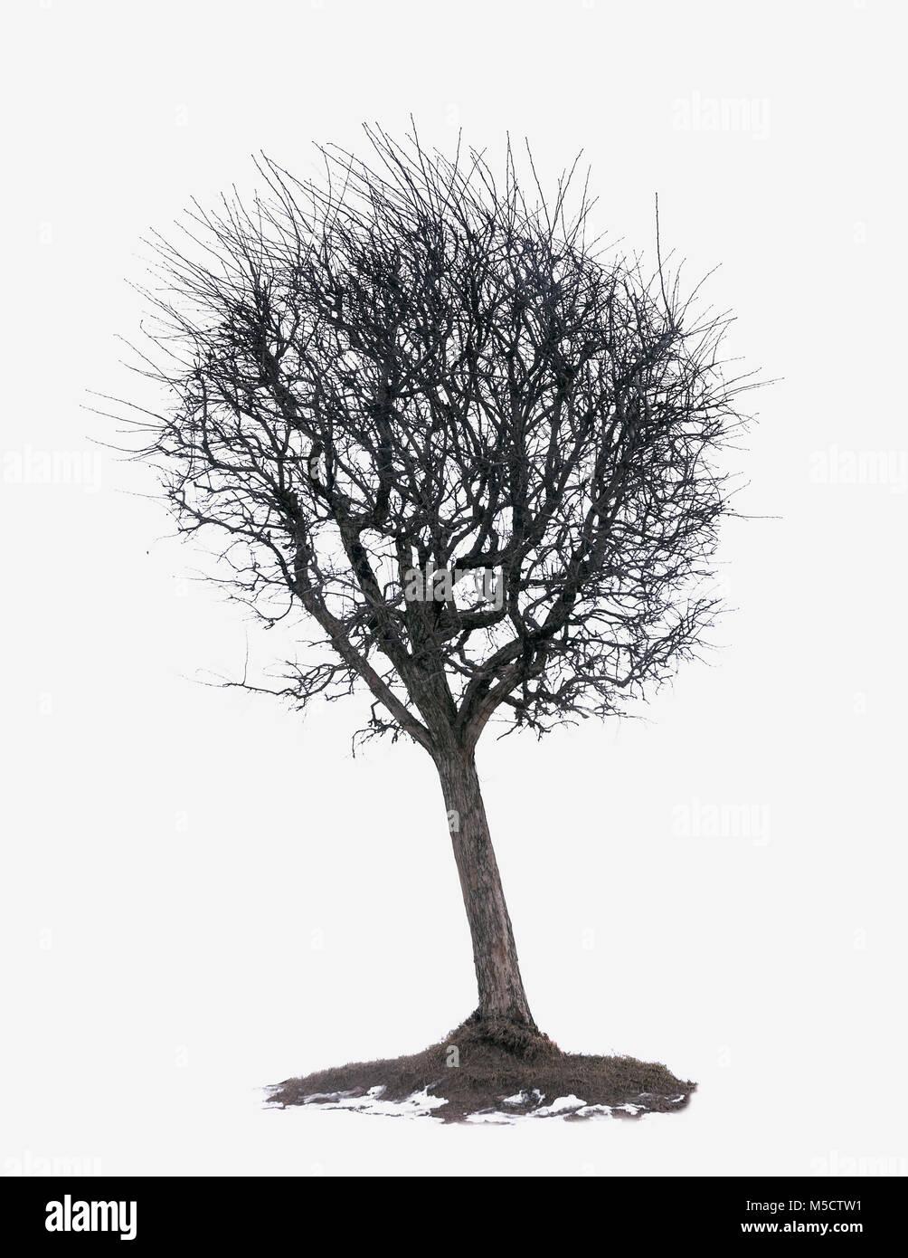 Wunderbar Kahler Baum Färbung Seite Bilder - Malvorlagen Von Tieren ...
