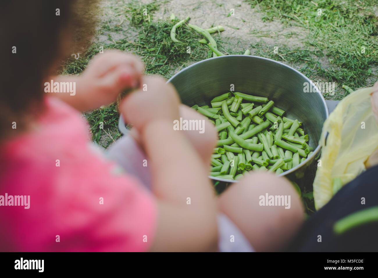 Ein junges Mädchen Kind schnappt frische grüne Bohnen in einen Topf. Stockbild