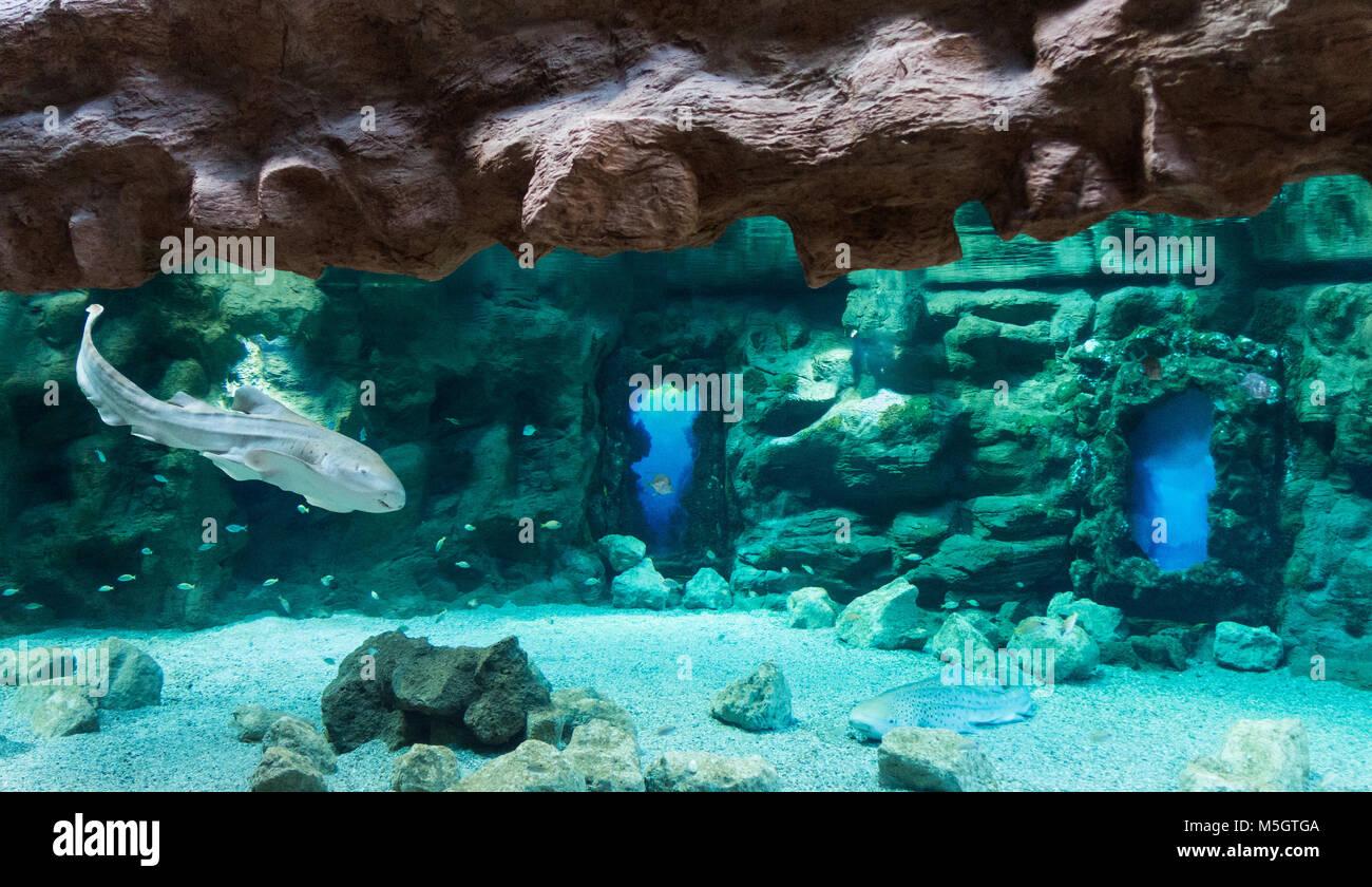 Aquarium shark in aquarium stockfotos aquarium shark in for Aquarium poema del mar