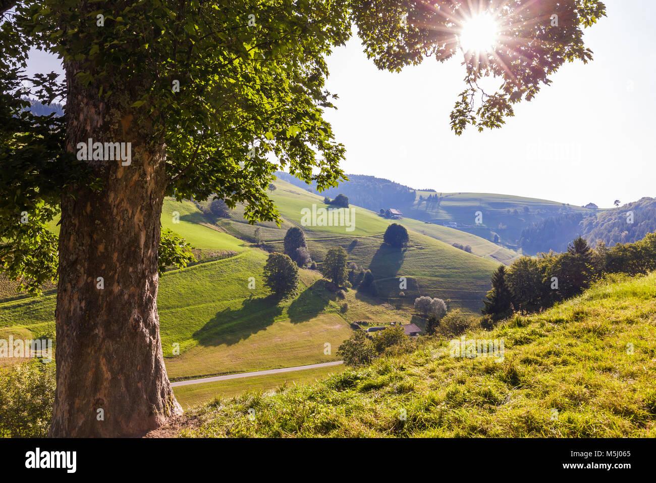 Deutschland, Baden-Württemberg, Schwarzwald, Münstertal, Baum, Wiesen, Wald, Schwarzwaldhof, Schwarzwaldhaus, Stockbild