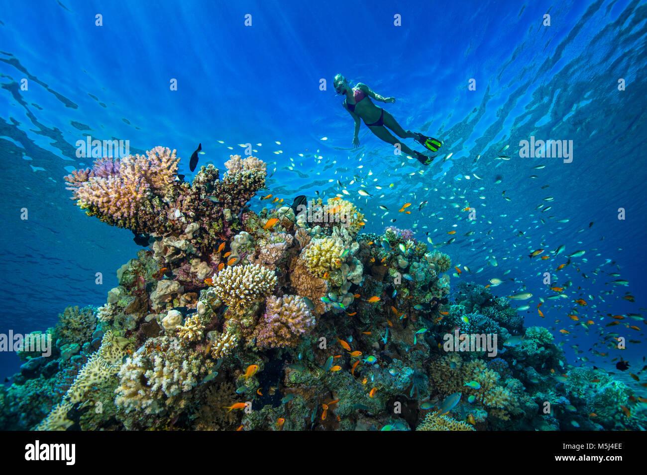 Ägypten, Rotes Meer, Hurghada, junge Frau Schnorcheln am Korallenriff Stockbild