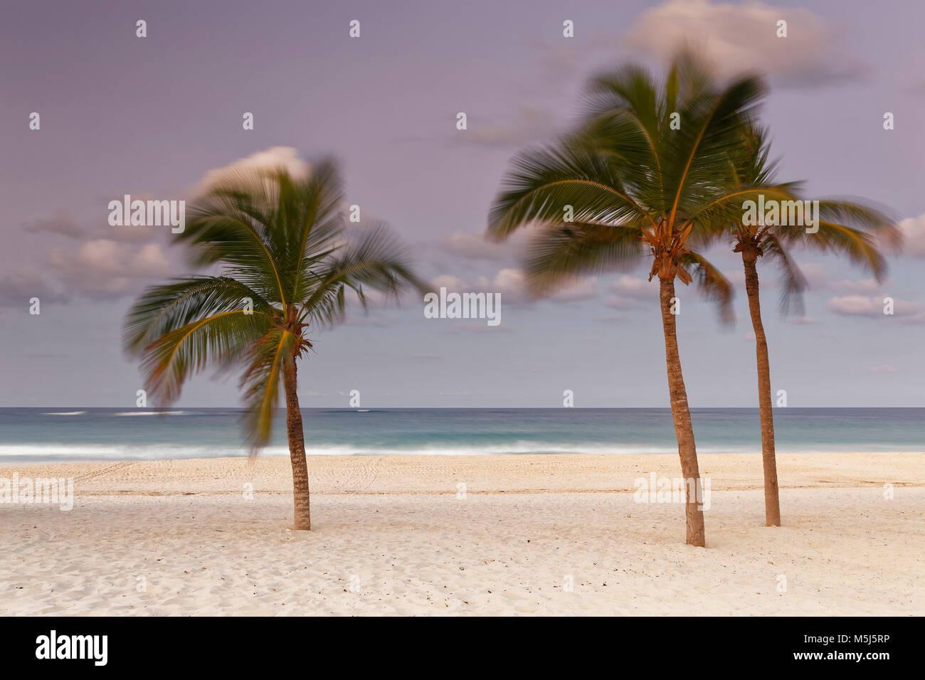 Karibik, Dominikanische Republik, Punta Cana, Playa Bavaro, bewegte Palmen am Strand bei Sonnenuntergang Stockbild