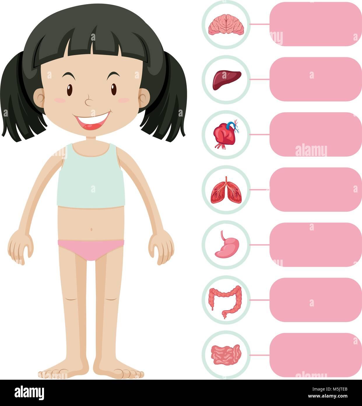 Großartig Interne Teile Des Körpers Fotos - Menschliche Anatomie ...