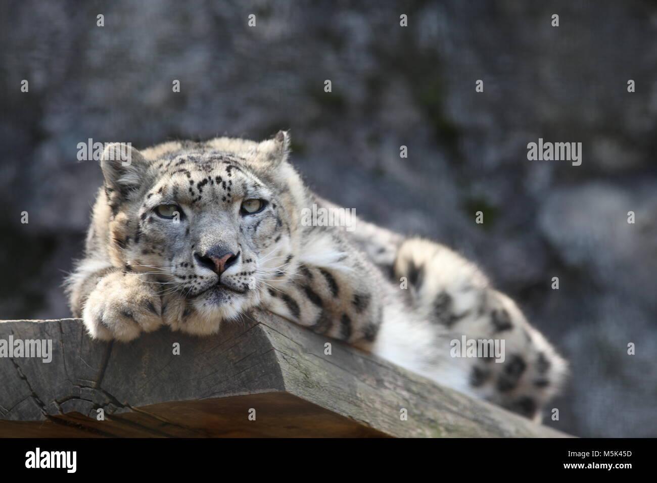Tama Zoological Park, Tokio Stockbild