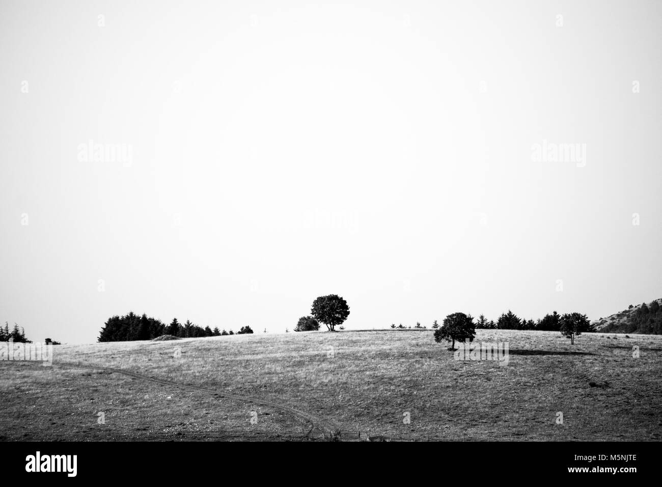 Bäume auf einem Hügel. Stockbild