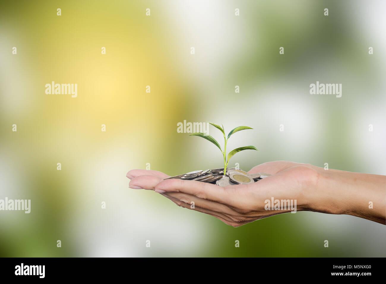 Hand, die Münzen mit wachsender Baum mit kopieren. Baum auf Thai Münzen. Investitionen wachsende Geld Stockbild