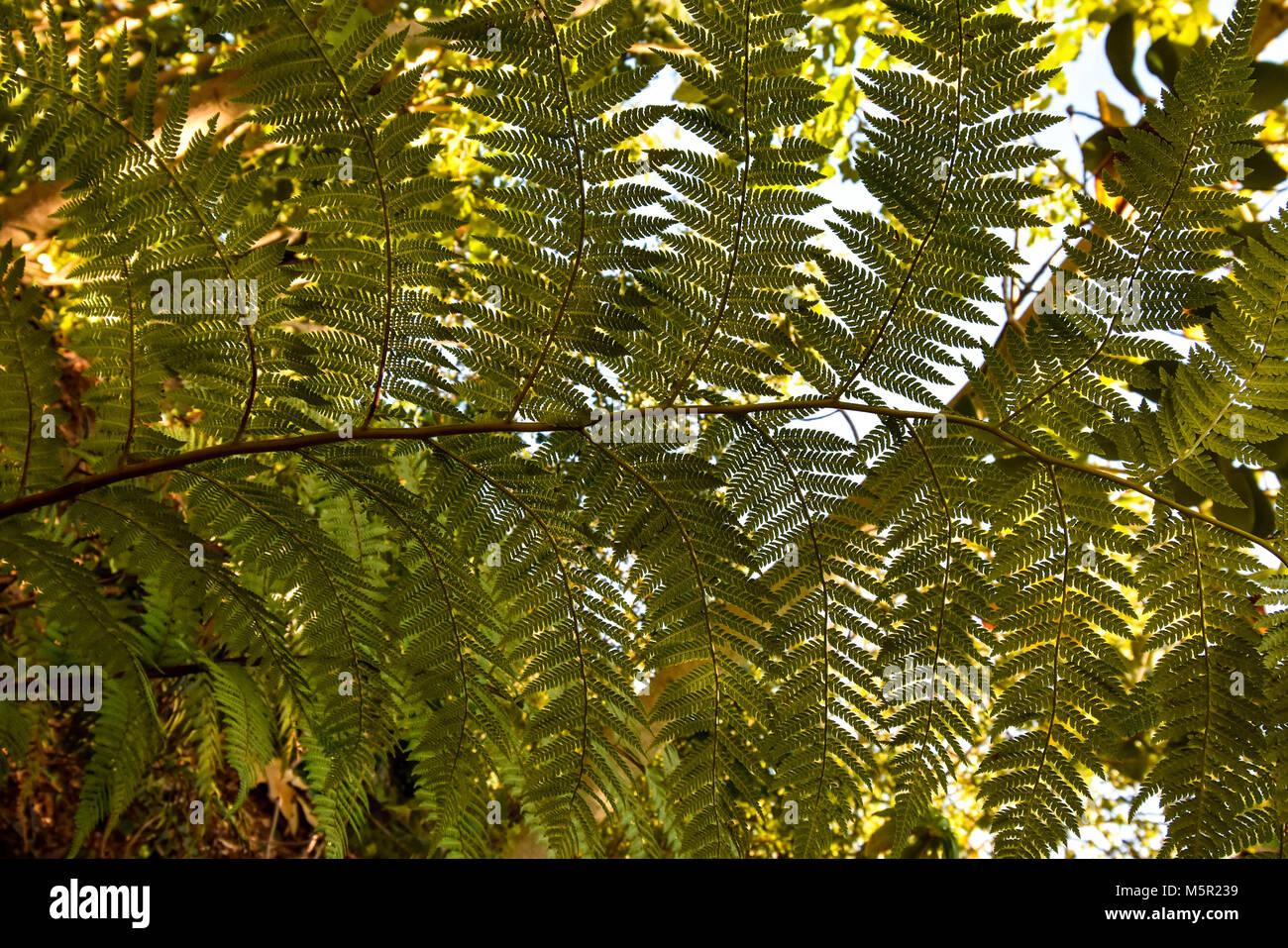 Die UC Berkeley Botanical Garden ist eine unglaubliche Quelle der natürlichen Schönheit auf dem Campus, Stockbild