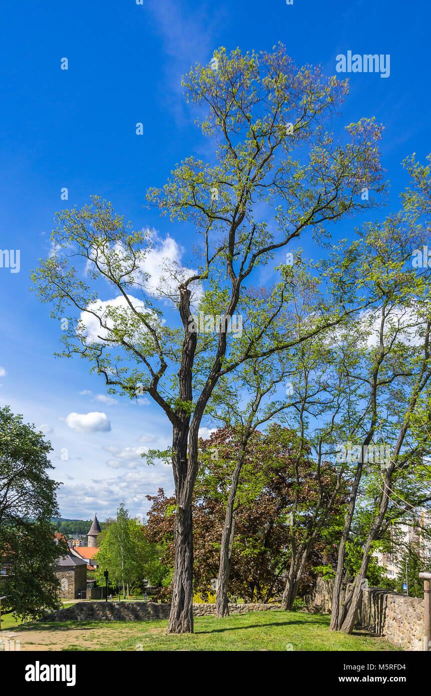 Klatovy, Tschechien - Bäumen und Vegetation an der mittelalterlichen Stadtbefestigung. Stockbild