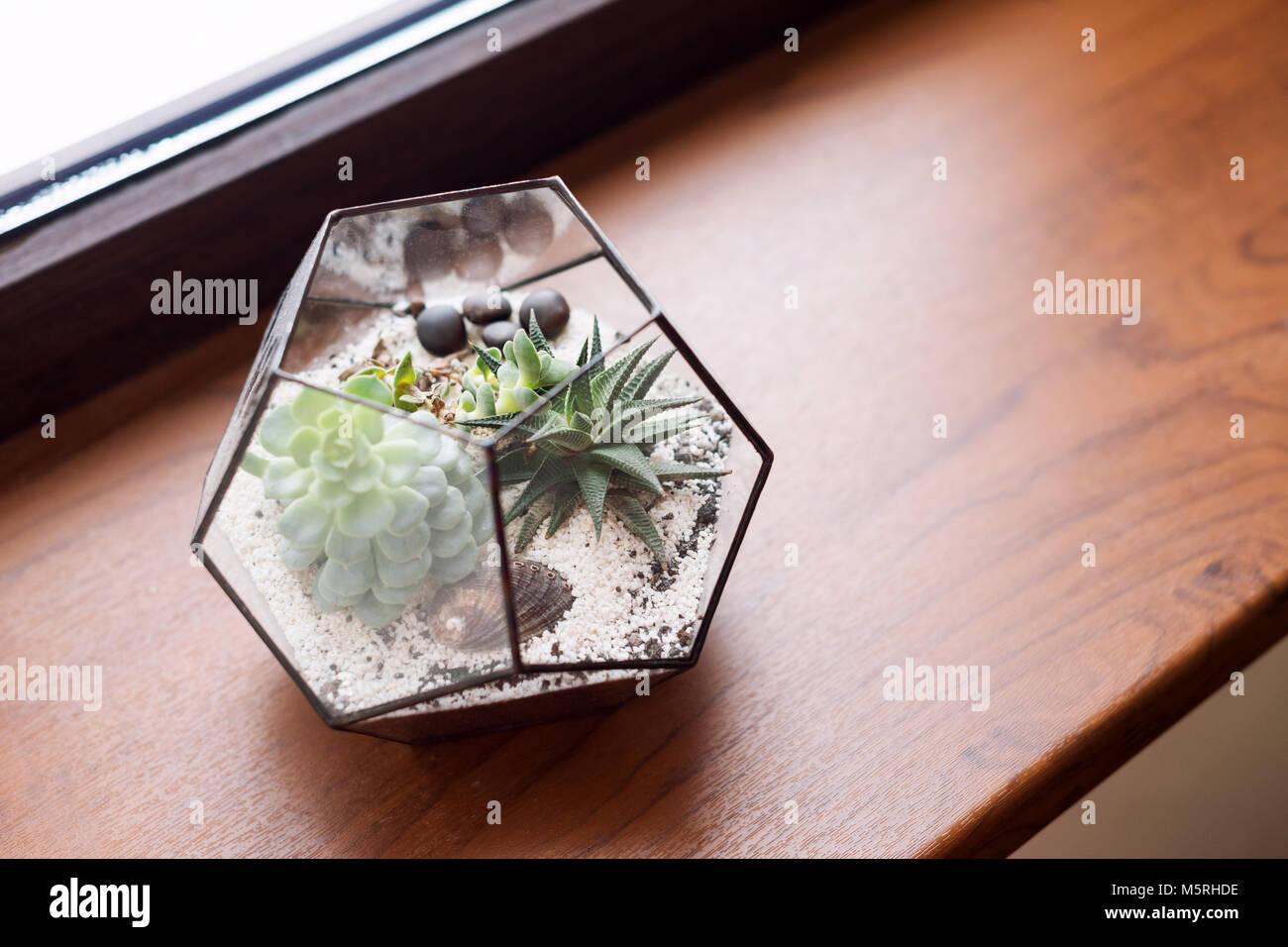 Mini Saftigen Garten In Glas Terrarium Auf Holz Fensterbank
