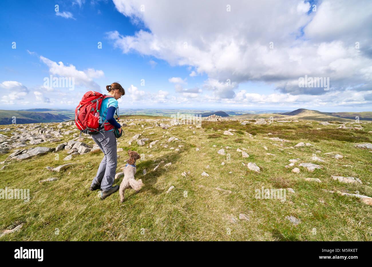 Eine weibliche Wanderer geben ihr Hund ein behandeln Nach einem Spaziergang auf den Gipfel des Großen getragen, Stockbild