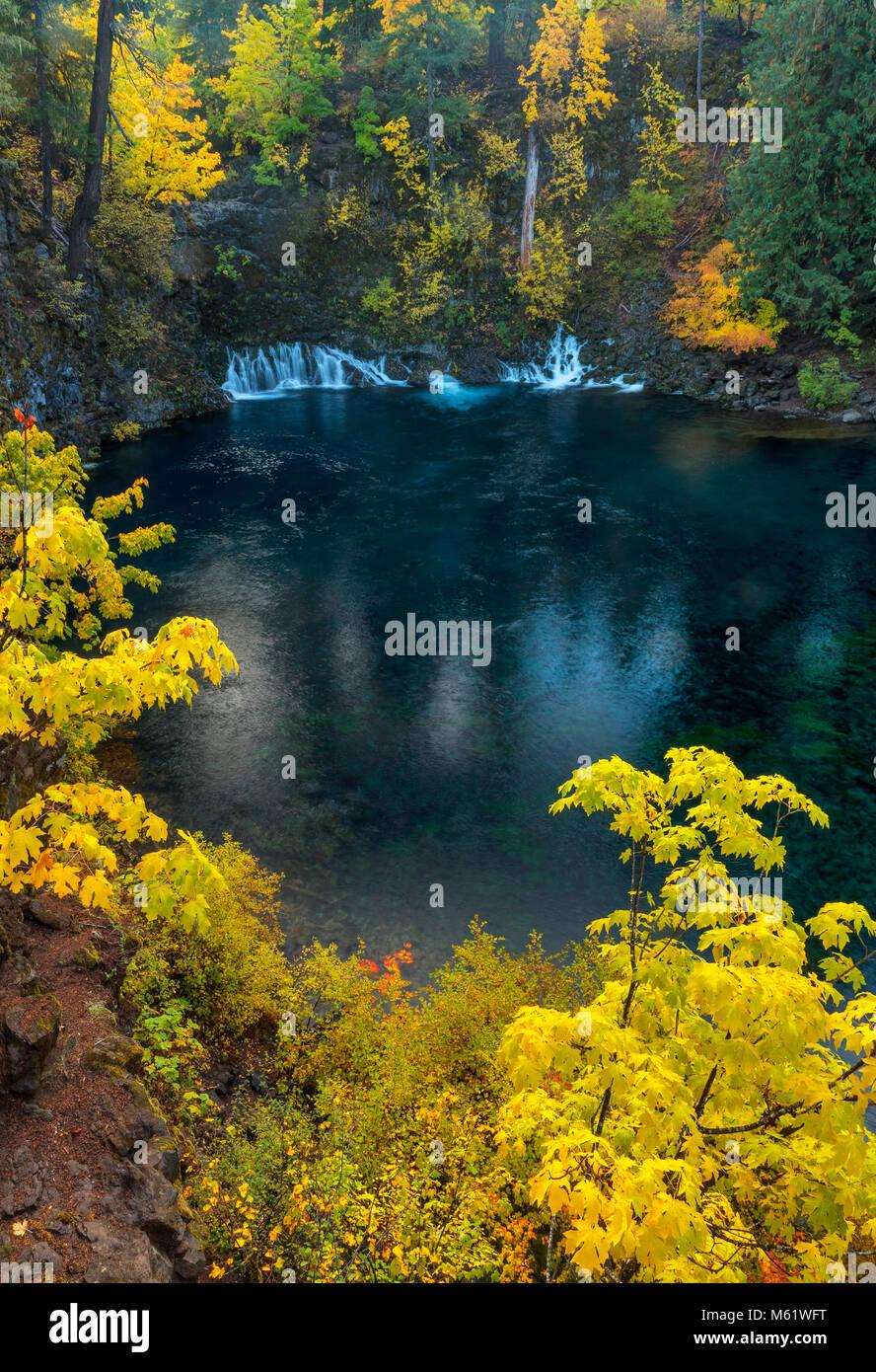Tamolitch fällt, blauen Pool, McKenzie River National Wild und Scenic River, Willamette National Forest, Oregon Stockbild
