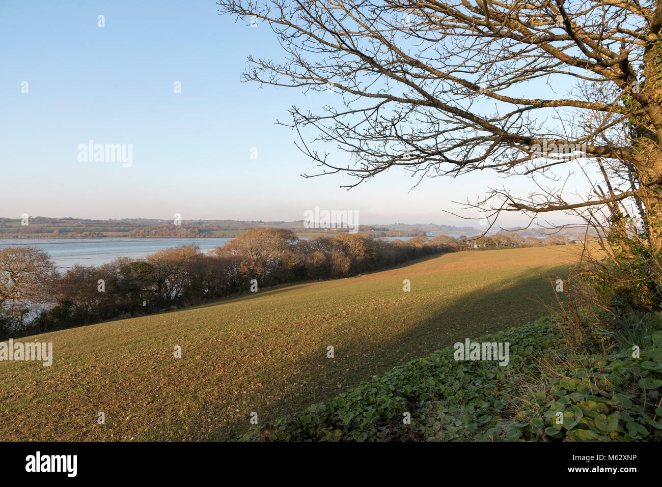 Sheviock, East Cornwall, England, Großbritannien. Winter Szene von Ackerland und die St-deutschen Fluss bei Stockbild