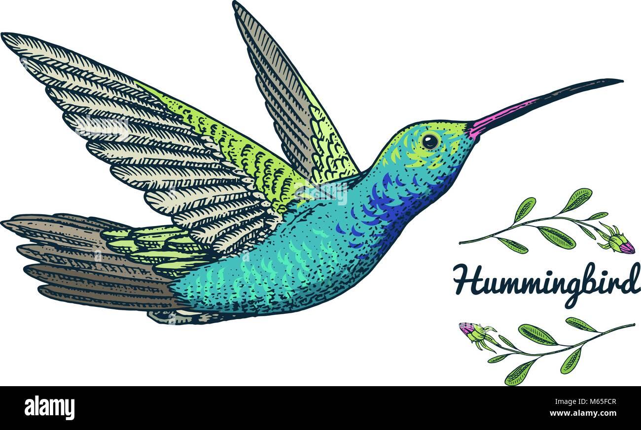Berühmt Druckbare Kolibri Malvorlagen Zeitgenössisch - Entry Level ...