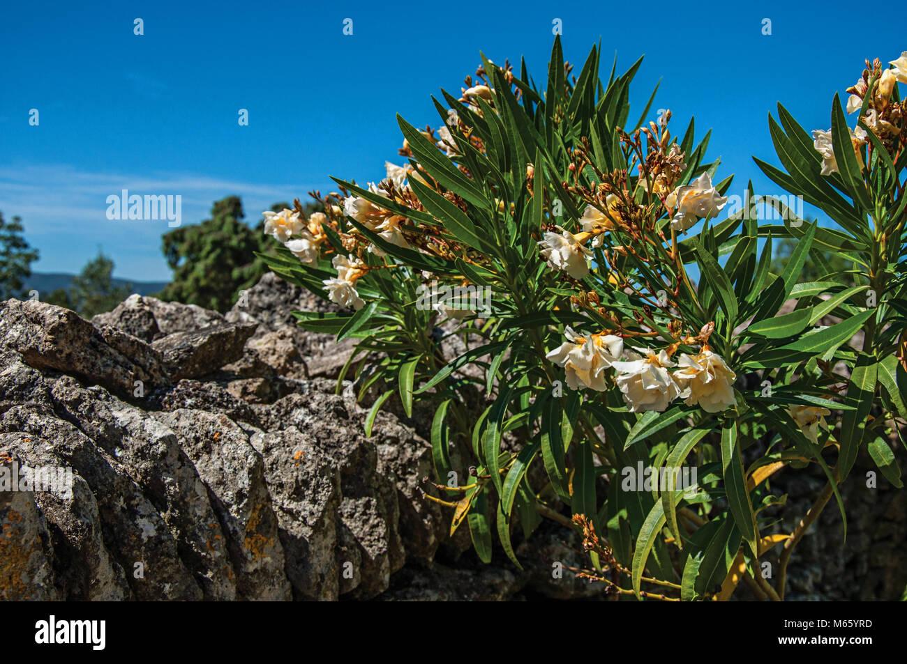 Close Up Aus Stein Gemauerten Zaun Und Blumen Unter Sonnigen Blauen