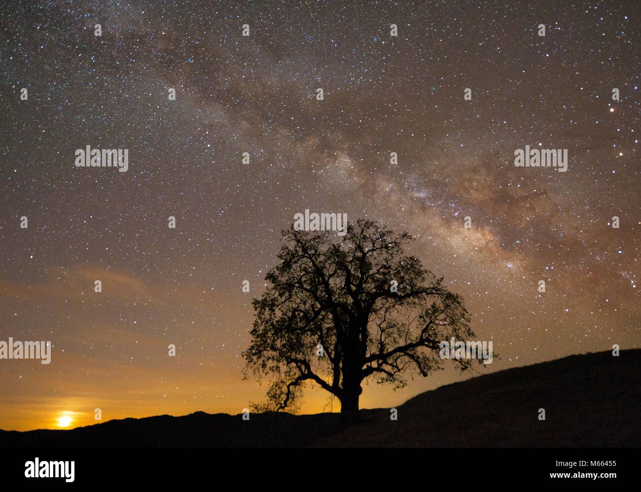 Milchstraße, Mondaufgang, Coast Live Oak, Quercus agrifolia, Los Padres National Forest, Monterey County, Kalifornien Stockbild