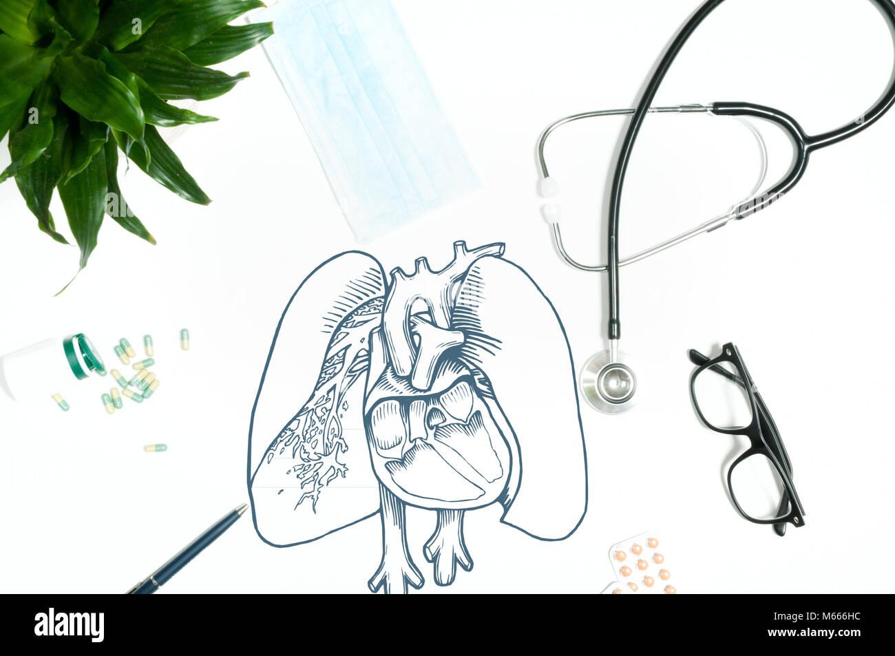 Atemberaubend Anatomie Eines Stethoskops Fotos - Menschliche ...