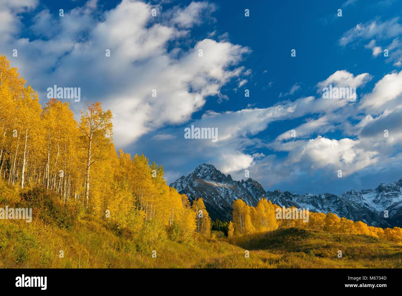 Sonnenuntergang, Aspen, Populus tremula, Mount Sneffels, Dallas Divide, Uncompahgre National Forest, Colorado Stockbild