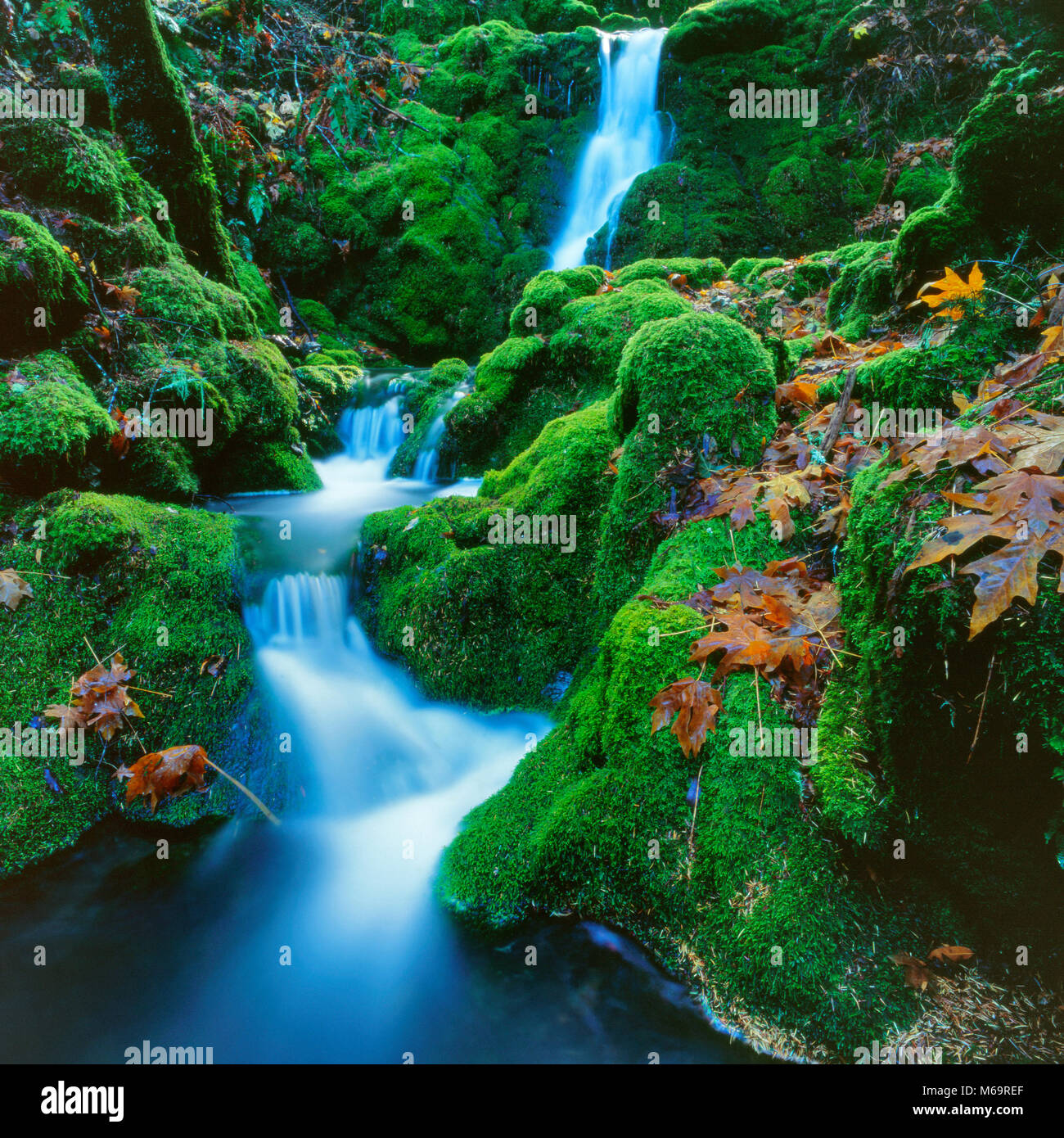 Moss fällt, Cataract Canyon, Mount Tamalpais, Marin County, Kalifornien Stockbild