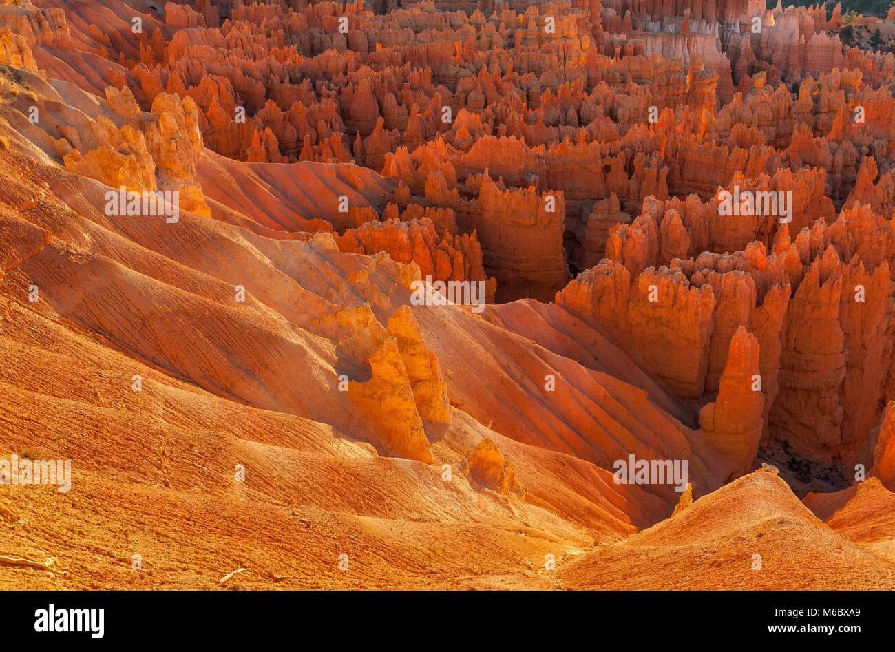 Hoodoos, die Wall Street, Bryce Canyon National Park, Utah Stockbild