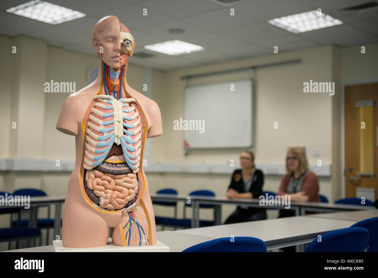 Atemberaubend Lehre Der Menschlichen Anatomie Ideen - Menschliche ...