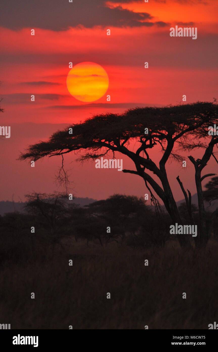 Sonnenuntergang in der Serengeti erfasst Stockbild