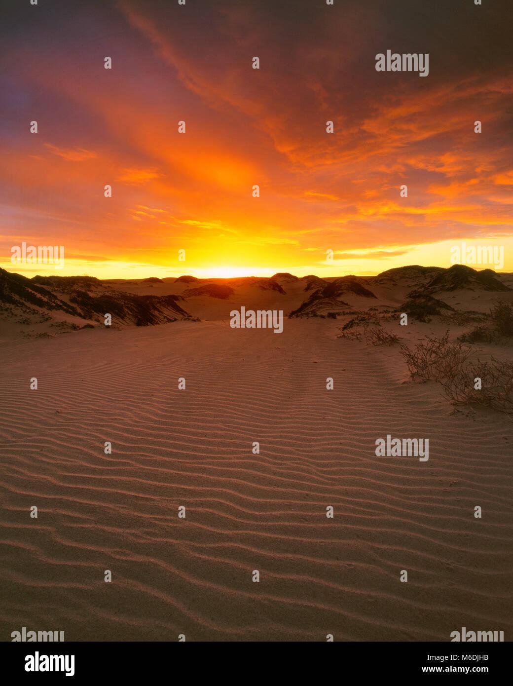 Dawn, Pismo State Beach, San Luis Obispo County, Kalifornien Stockbild