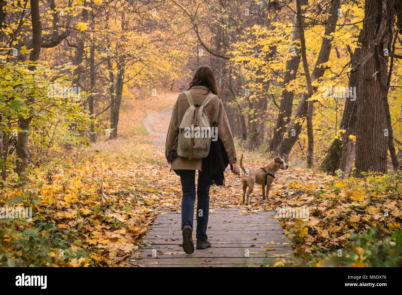 Junge weibliche Person und ihr Haustier Staffordshire Terrier einen Spaziergang in den Wald und schönen Oktober Stockbild