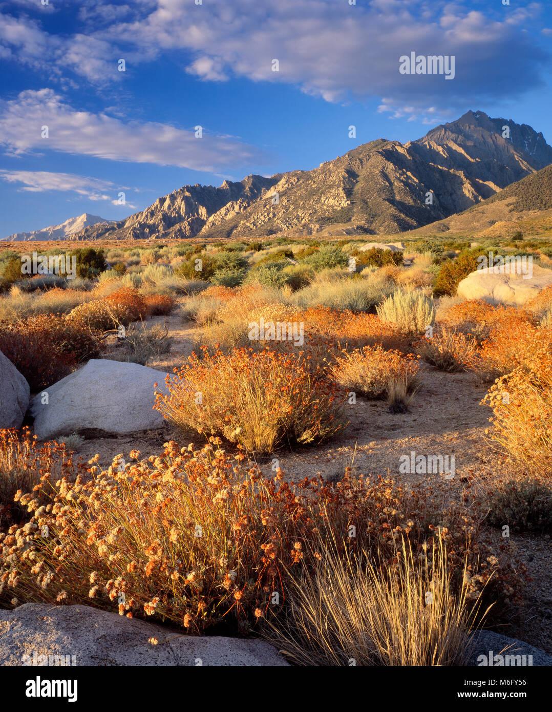 Sunrise, symmes Creek, Mount Williamson, Inyo National Forest, östlichen Sierra, Sierra Nevada, Kalifornien, Stockbild