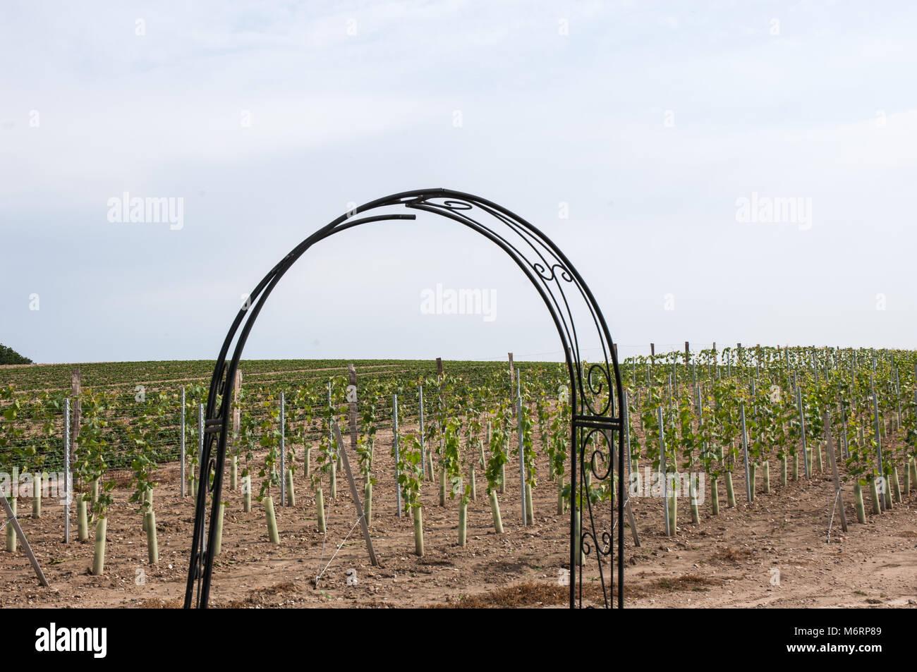 Weinanbau Stockfotos & Weinanbau Bilder Alamy