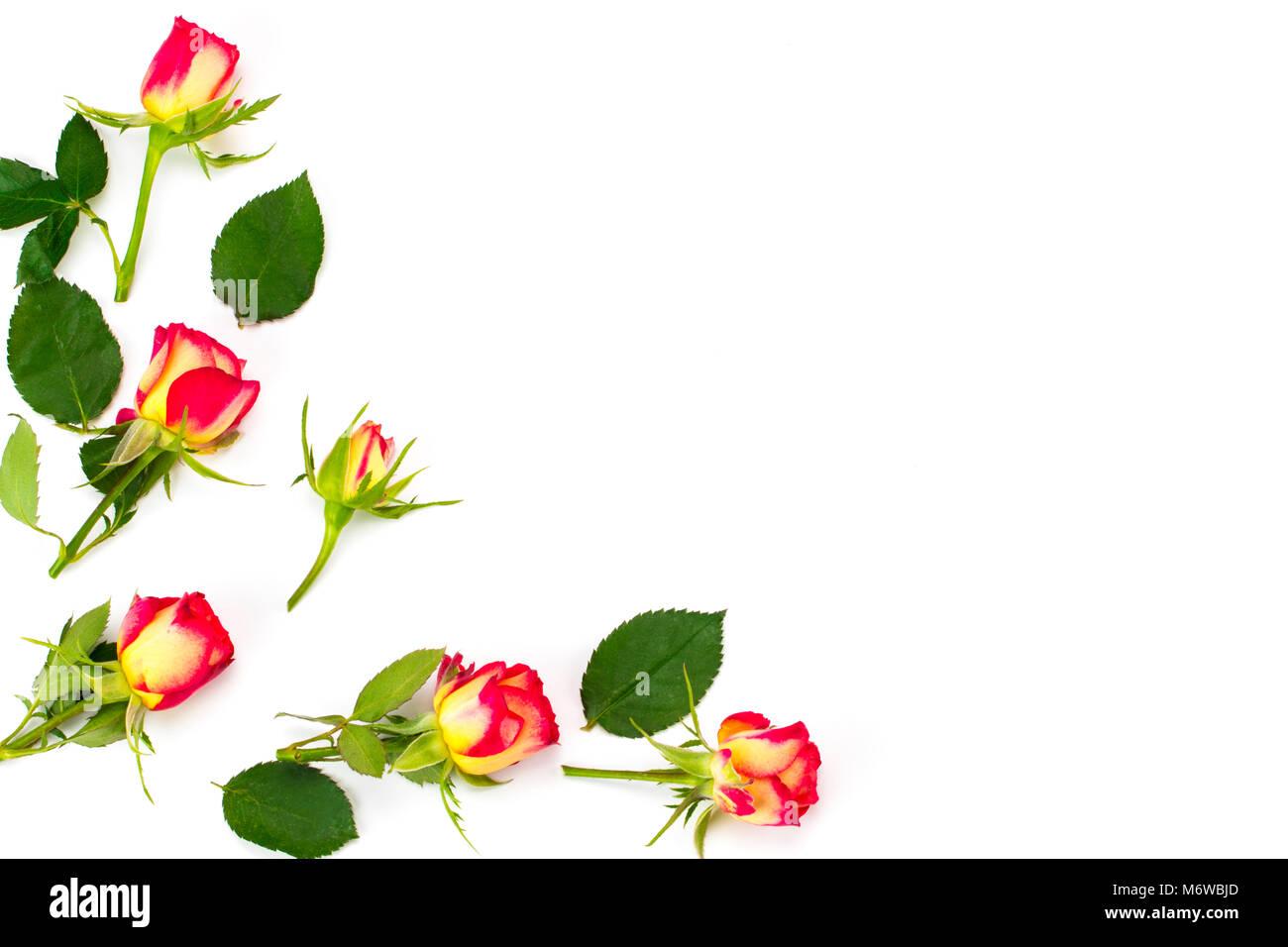 Blumen-Komposition. Gestell aus Rosenblüten. Flach legen, Top Aussicht Stockfoto