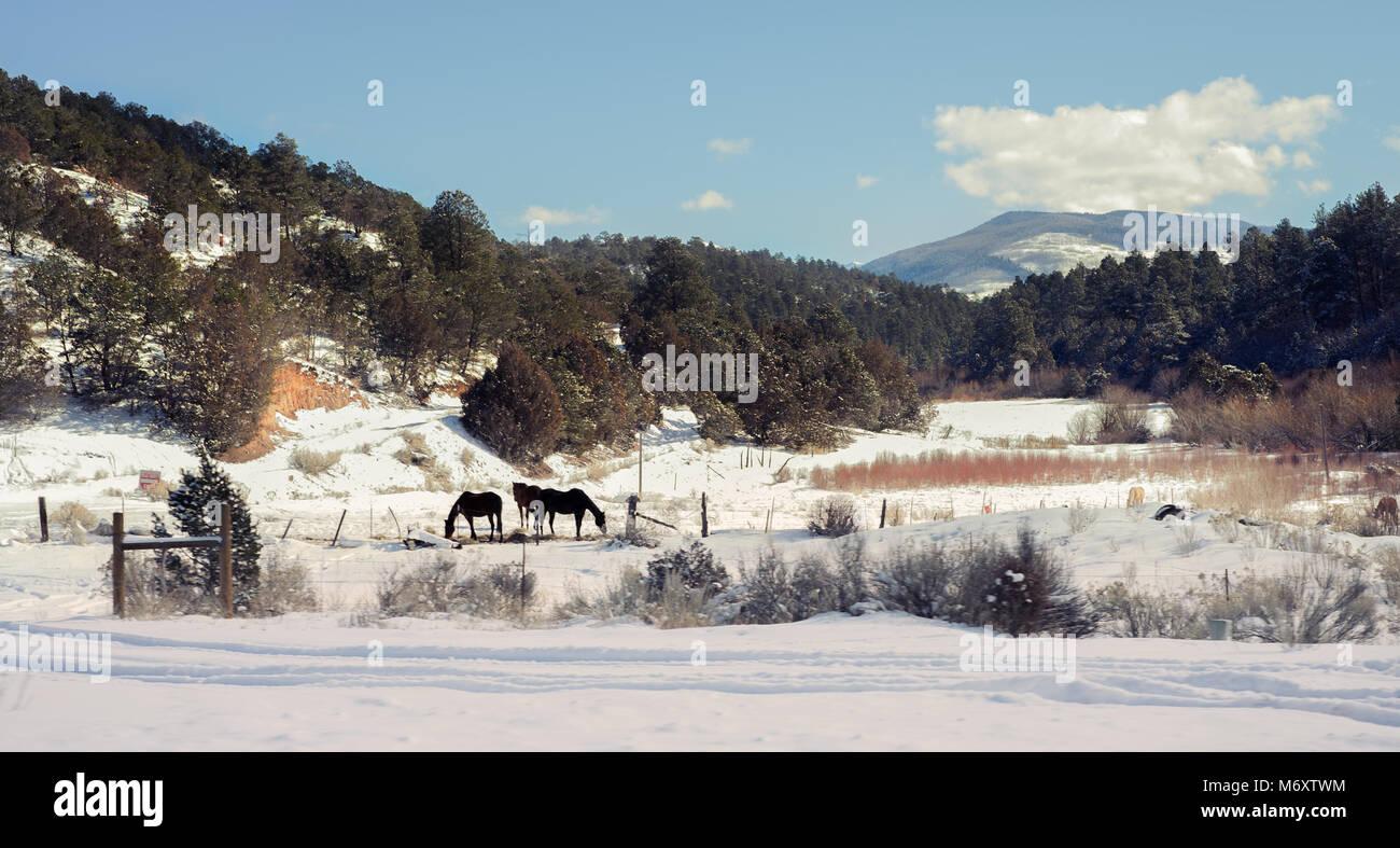 Pferde auf einer Ranch Stockbild