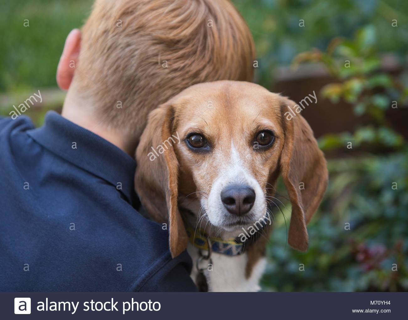 Junge rothaarige Junge mit zurück in die Kamera hält ein Beagle, der über seine Schulter in Richtung Stockbild