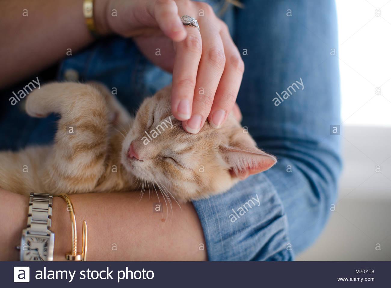 In der Nähe von Orange tabby Kitten mit geschlossenen Augen, während auf dem Kopf von Frau gestreichelt Stockbild