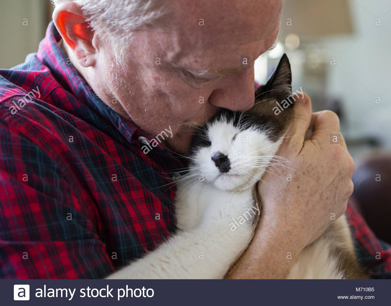 Mann mittleren Alters in Plaid Shirt küssen eine graue und weiße Katze auf dem Kopf Stockbild