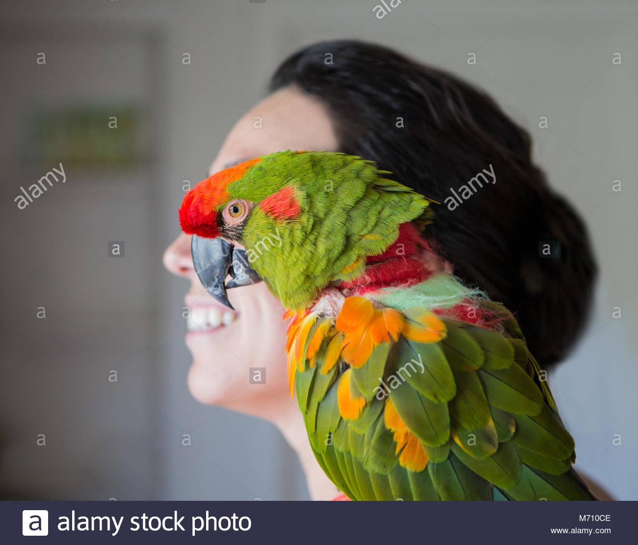 Nahaufnahme der grüne Papagei sitzen auf womans Schulter Neben zu Frau Kopf Stockbild