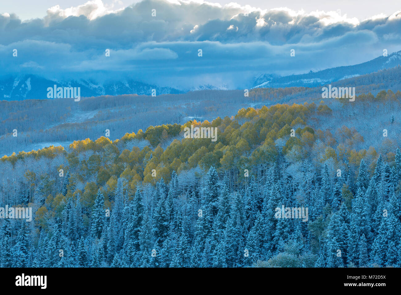 Clearing Sturm, Aspen, Wilson Mesa, Uncompahgre National Forest, Colorado Stockbild