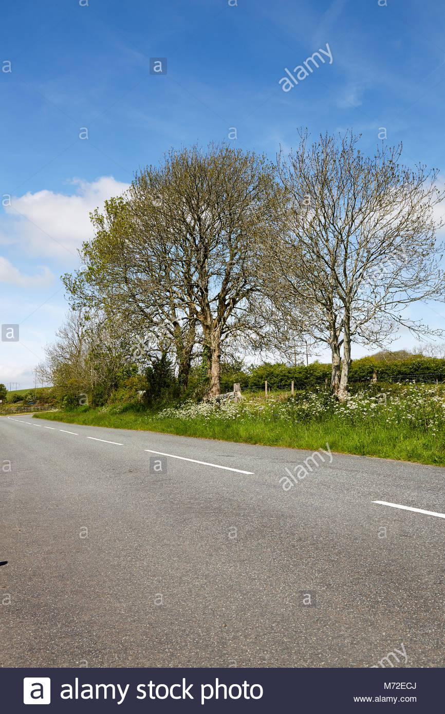 Englische Landschaft, open road mit grünen Felder von Hecken und Bäumen mit blauer Himmel, vereinzelt Stockbild