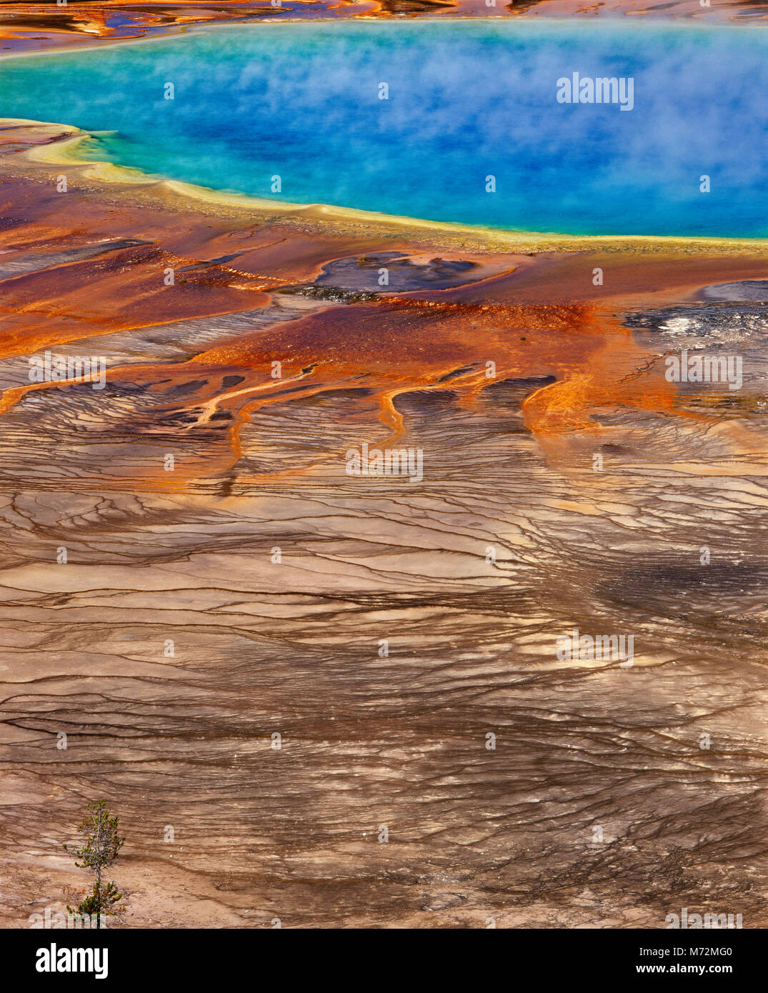 Grand Prismatic Spring, Midway Geyser Basin, Yellowstone-Nationalpark, Wyoming Stockbild