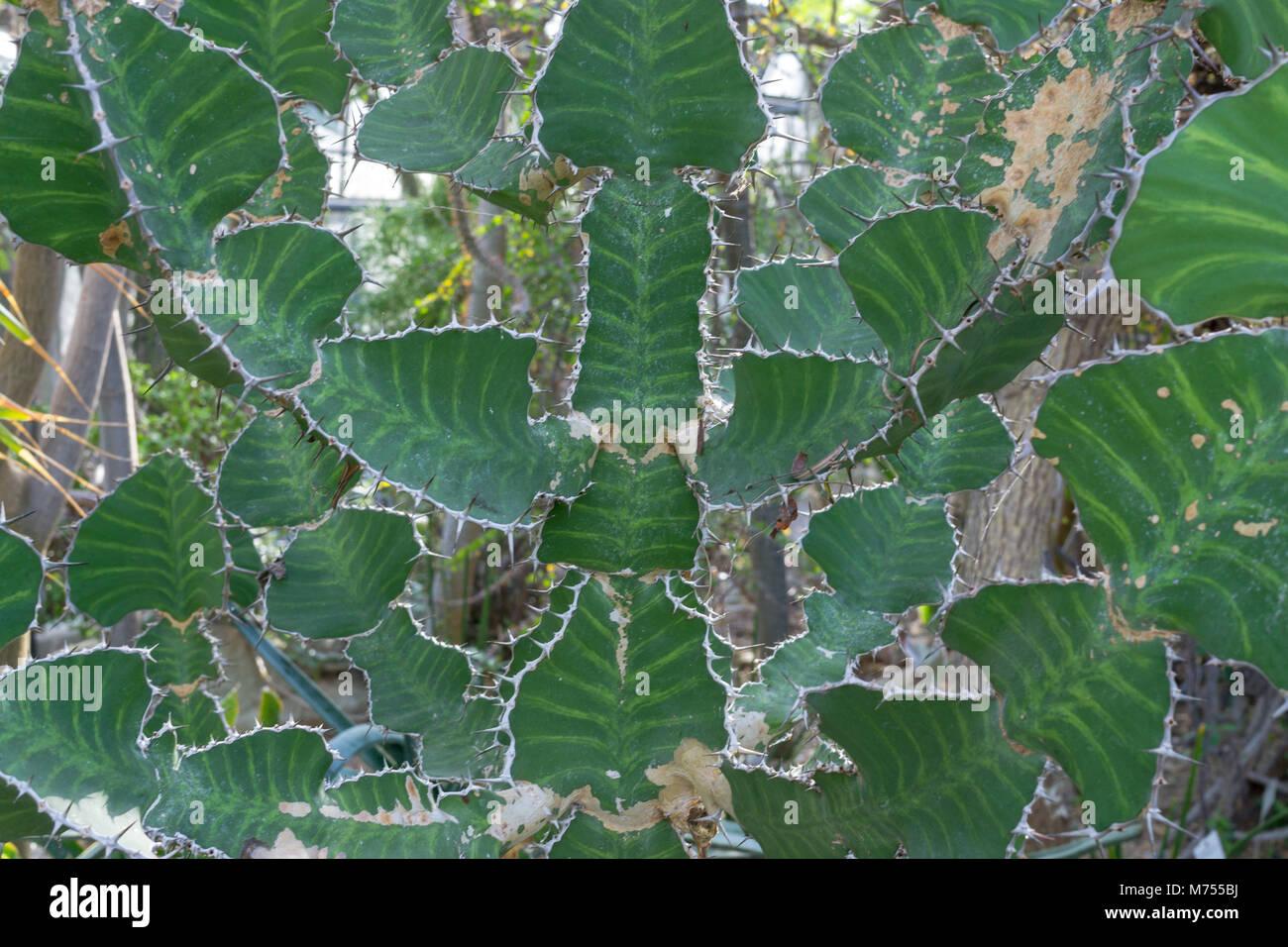 Ebene cactus Tapete mit viel Flugzeug Teile Stockbild