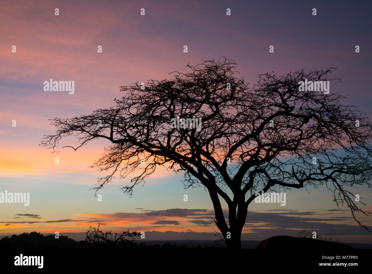 Rosa Wolken und blauer Himmel bei Sonnenaufgang in der Serengeti Nationalpark, UNESCO-Weltkulturerbe, Tansania, Stockbild