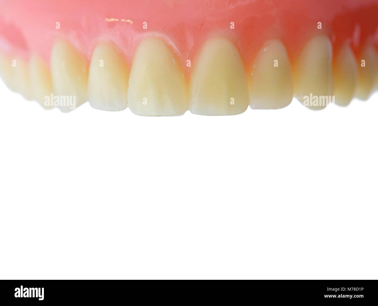 Ausgezeichnet Anatomie Der Zähne Und Des Zahnfleischs Bilder ...