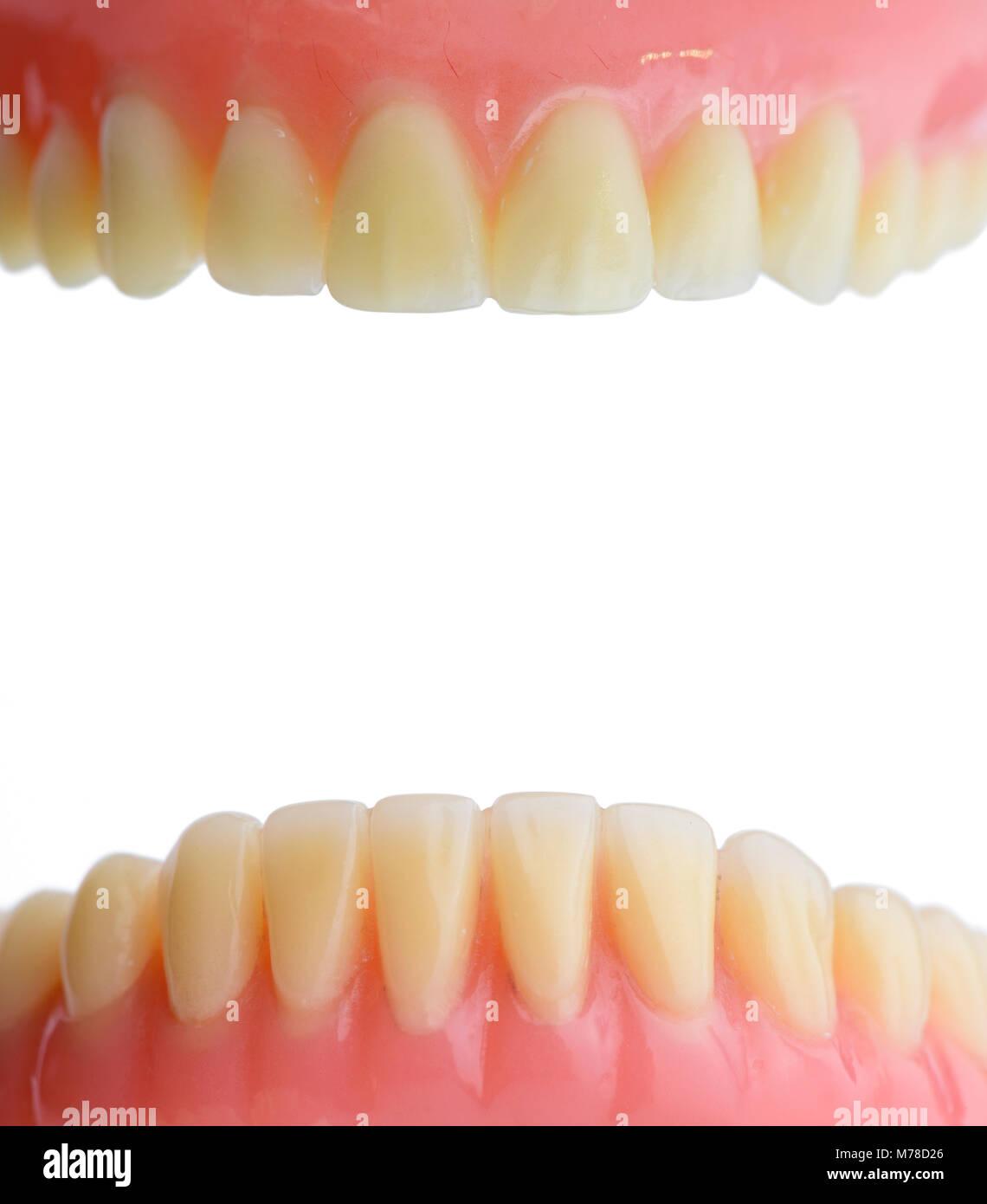 Zähne, Zahnfleisch menschlichen Mund Anatomie. Auf weissem ...