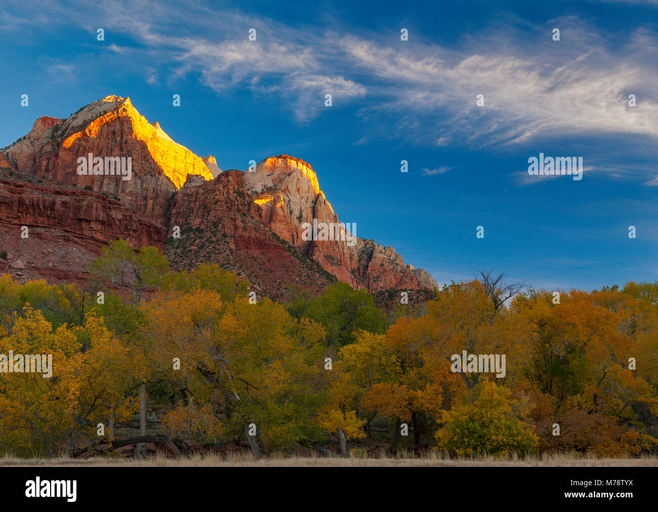 Sunrise, der Sentinel, Zion National Park, Utah Stockbild