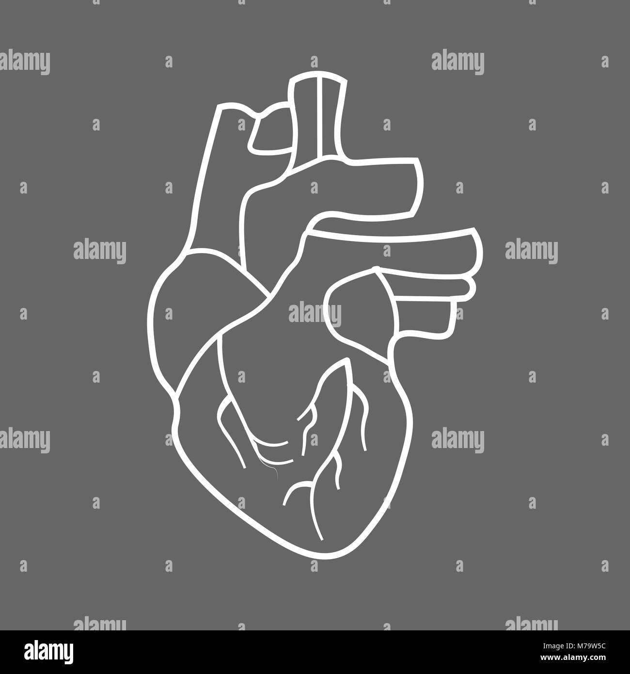 Stilisierte menschliche Herz Anatomie Symbol Leitung Vektor ...