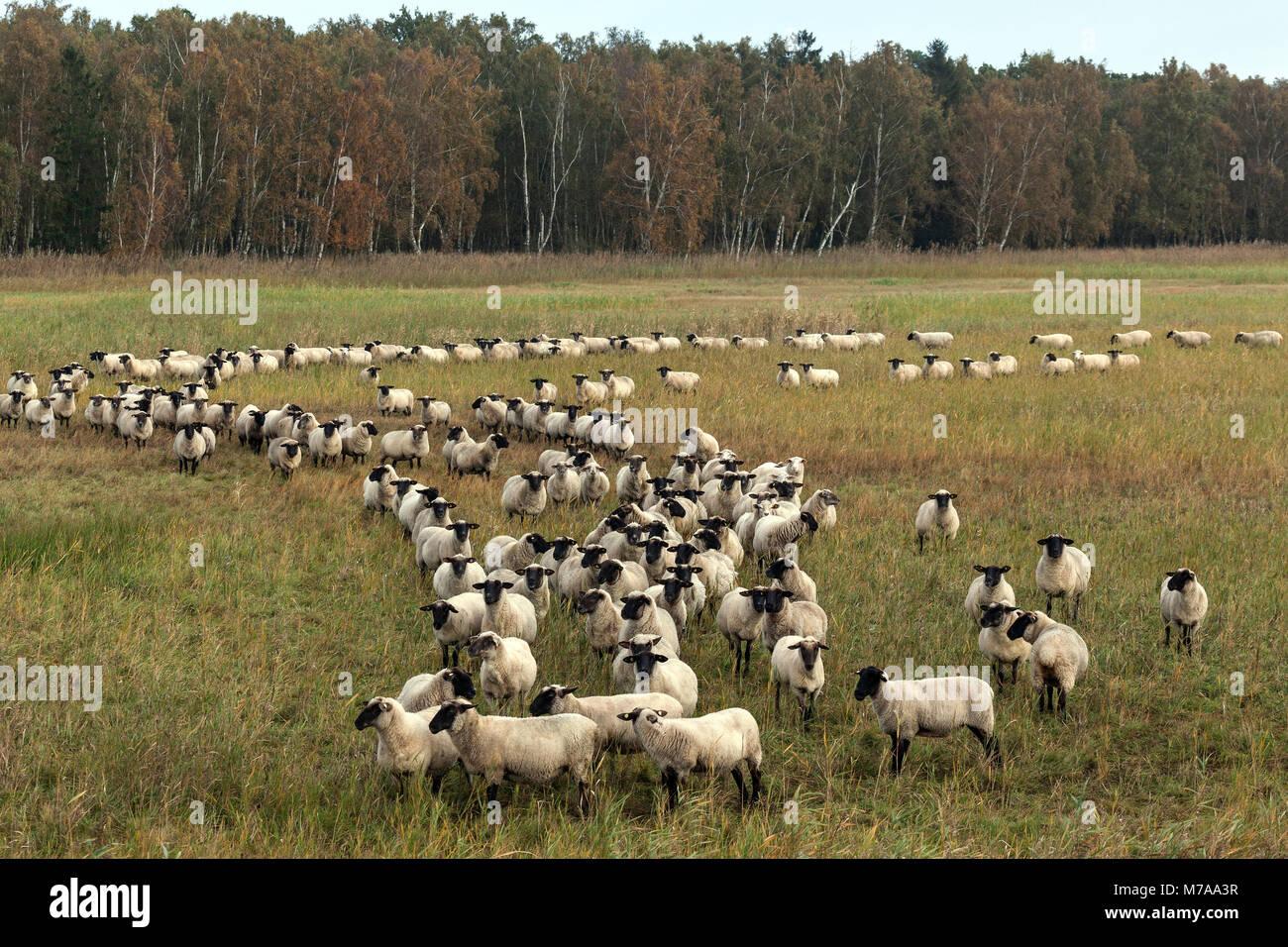 Ziemlich Schafe Draht Panels Fotos - Elektrische Schaltplan-Ideen ...