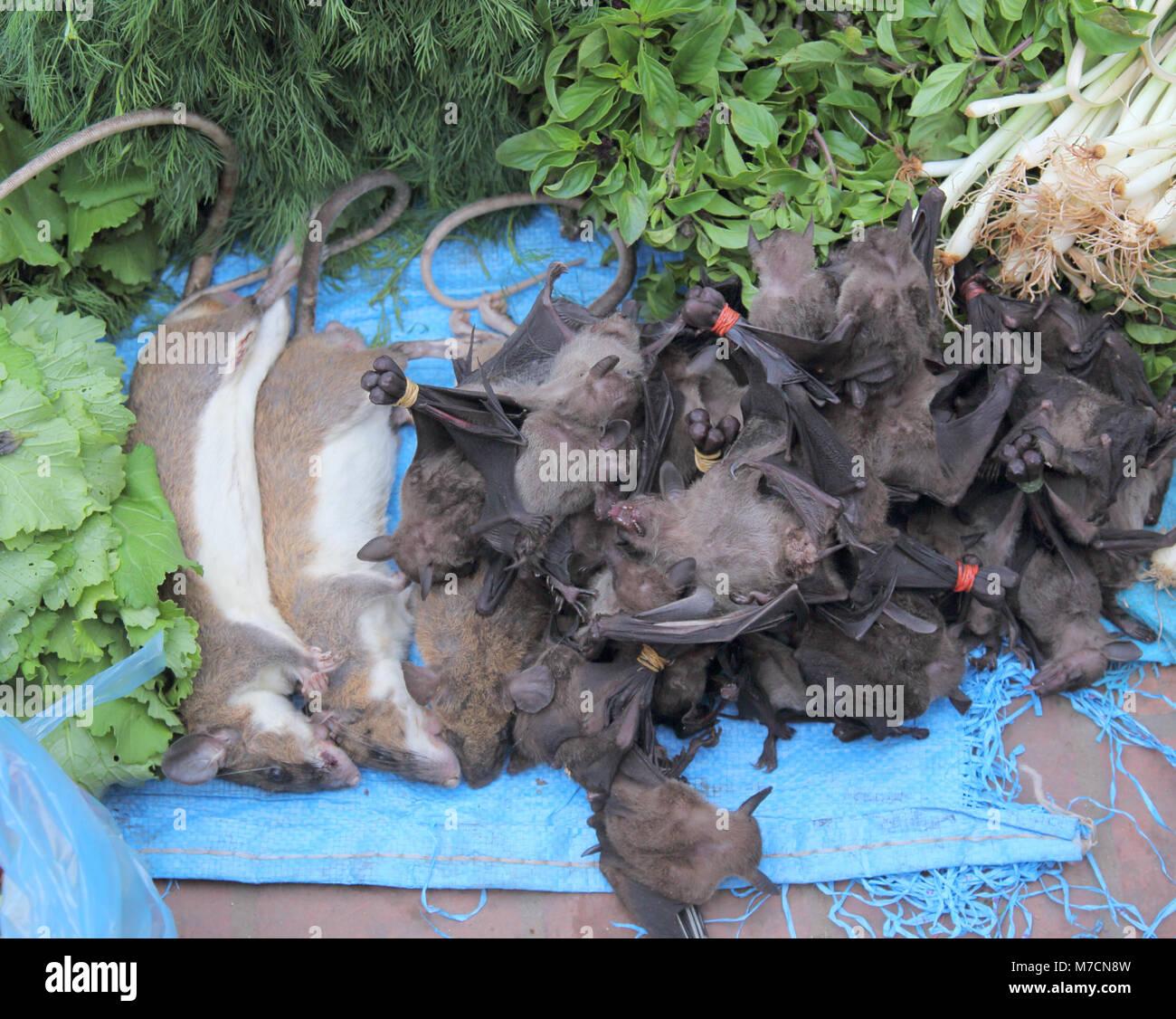 Ratten und Fledermäuse in den Morgen Markt in Luang Prabang Laos Stockbild