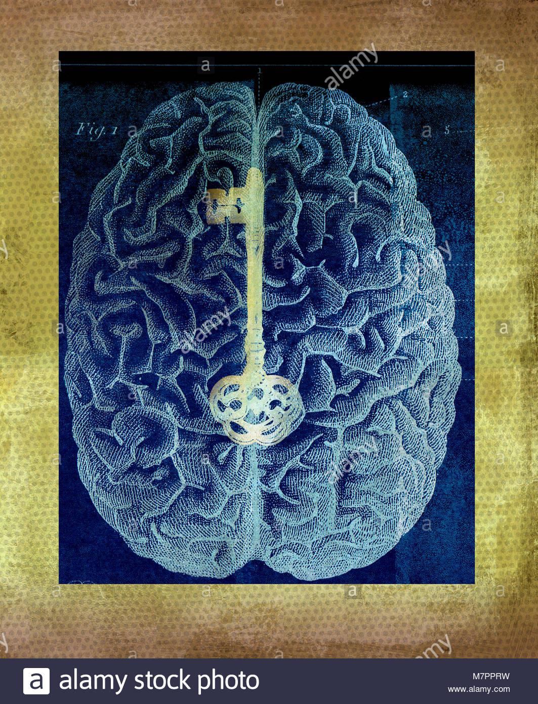 Goldenen Schlüssel auf dem Schaltplan auf menschliche Gehirn Stockbild