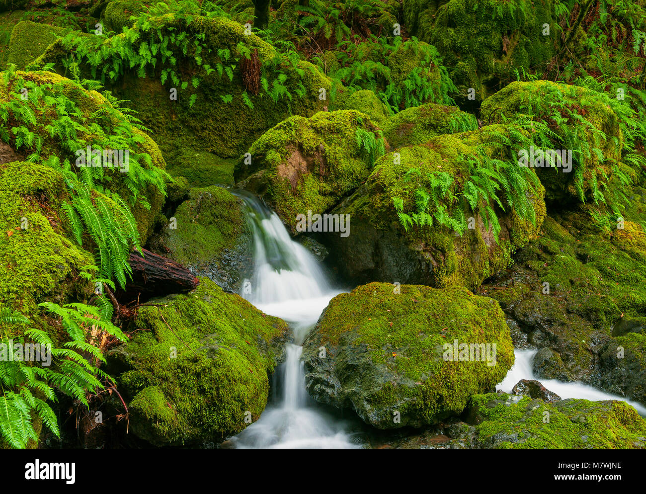 Fällt, Cataract Canyon, Mount Tamalpais, Marin County, Kalifornien Stockbild